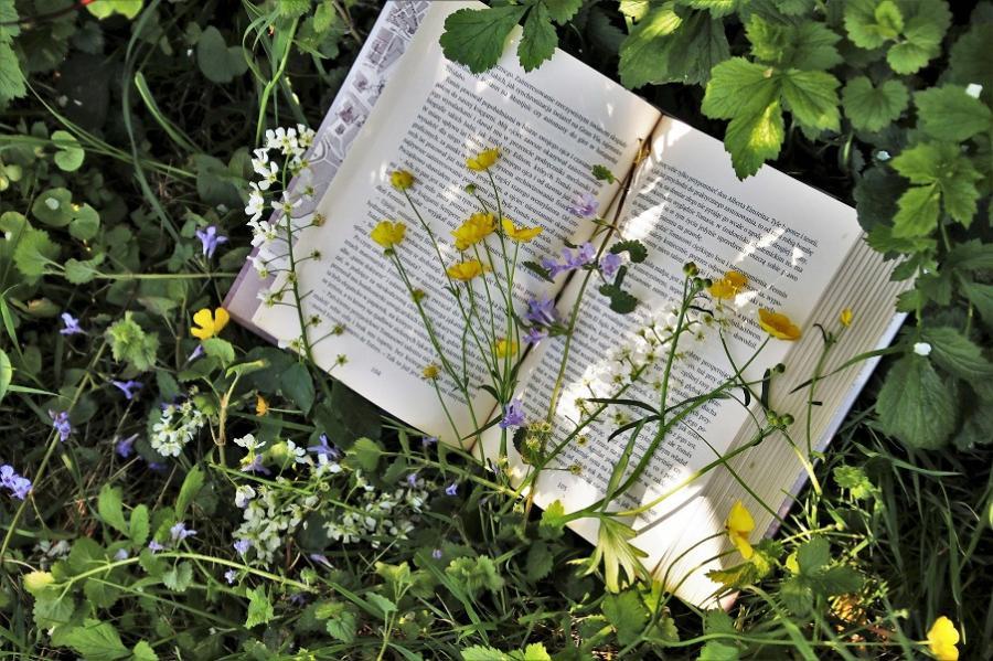 bog på græsset med forårsblomster